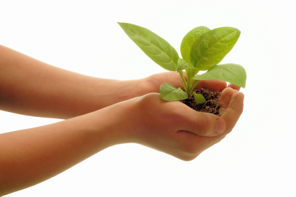 woman-holding-seedling-in-hands
